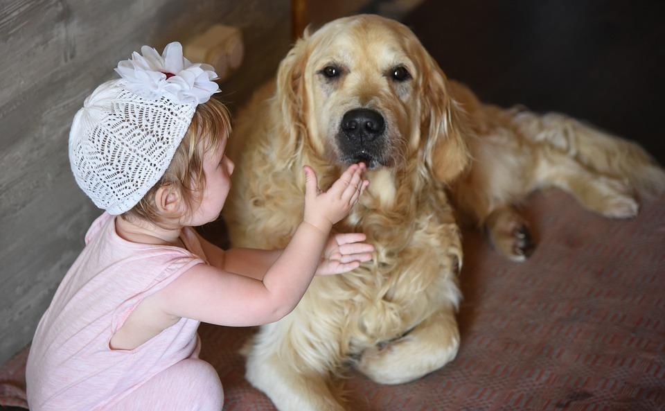 psiak i dziecko